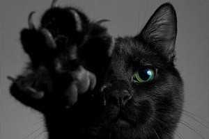 правила выбора кошки в дом