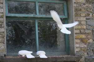 птица которая ударилась о окно