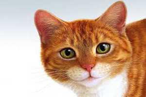 рыжий кот и приметы с ним