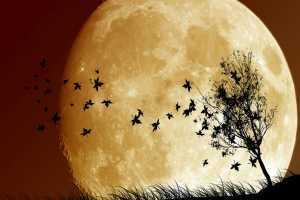 дерево с птицами и позади луна