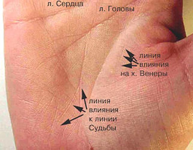 Где находиться линия судьбы на руке