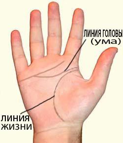 Как выглядит линия ума на руке