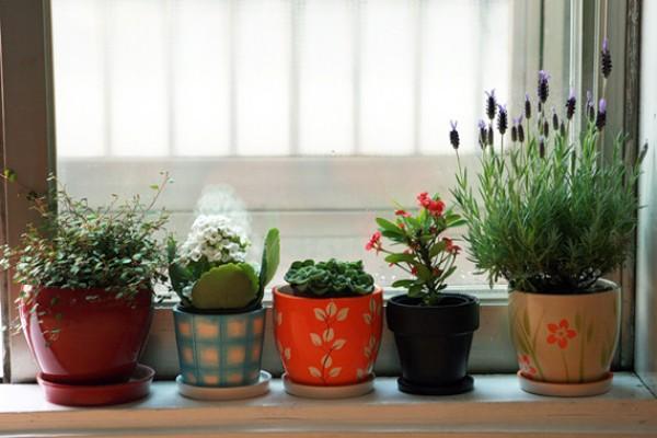 Растения для дома по фен-шуй