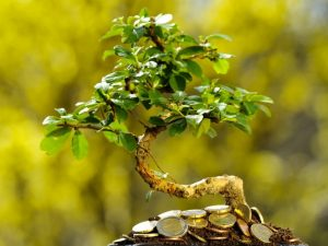 Дерево по фен-шуй