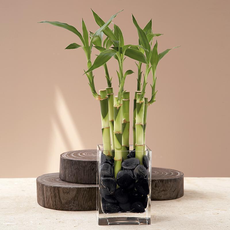 Бамбук в оформлении зоны семьи и здоровья