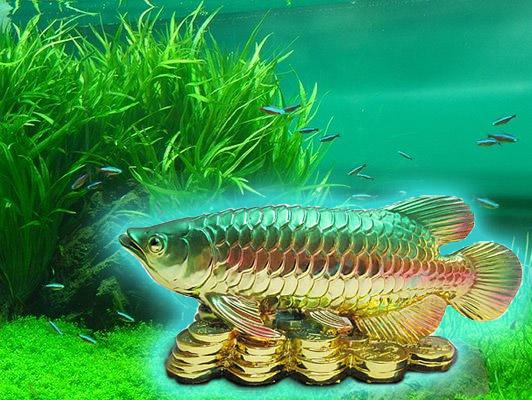 Талисманы для активации аквариума
