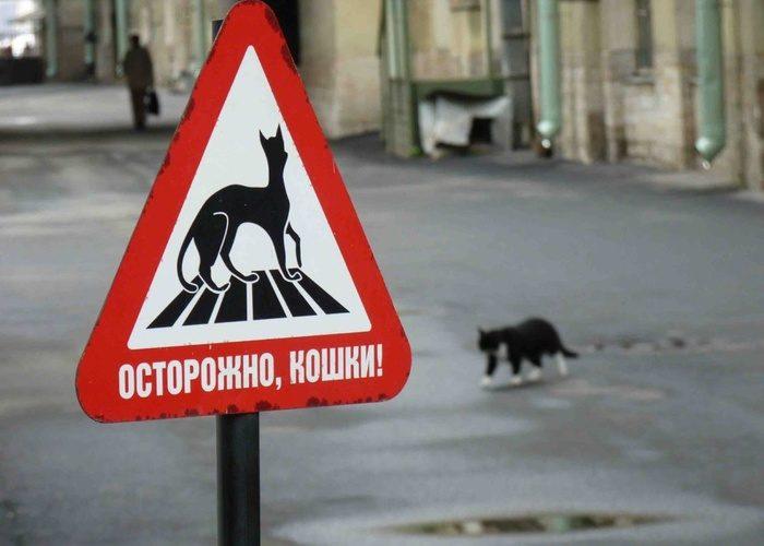 К чему сбить кошку?