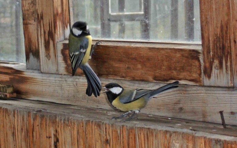 Птица на окне