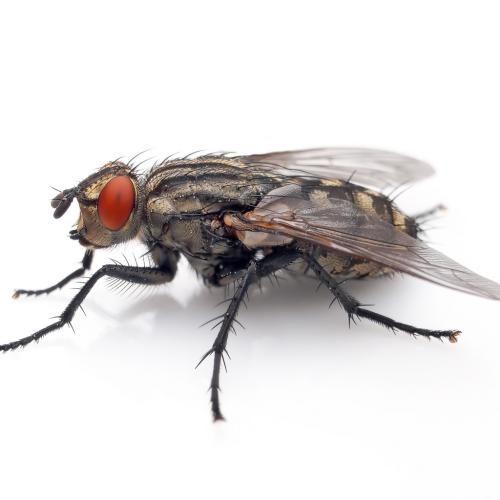 Примета: убить муху