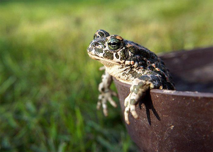 Приметы про жабу