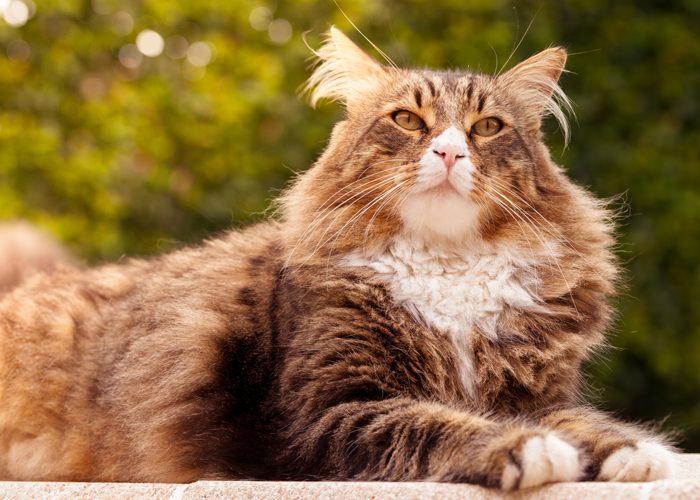 Суеверия о котах