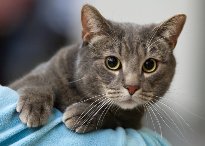 Нельзя смотреть коту в глаза