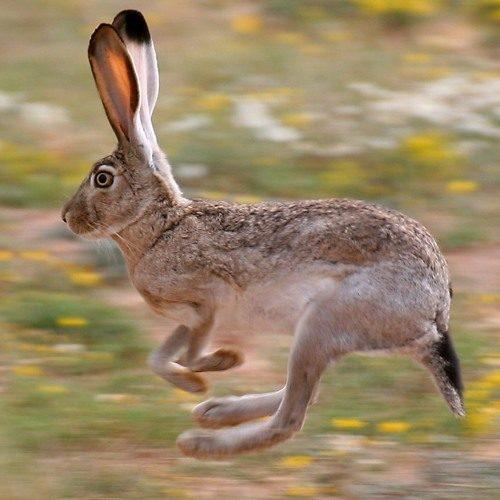Сбить зайца