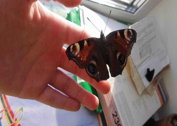 Что, если бабочка залетела в дом?