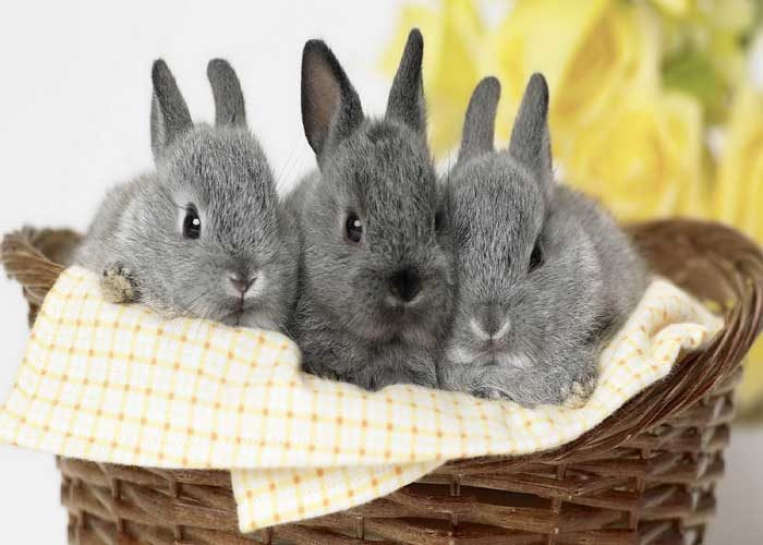 Приметы о кроликах