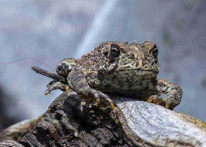 Приметы о жабах