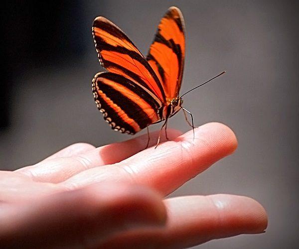 Бабочка на человеке