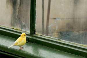 птица села на подоконик