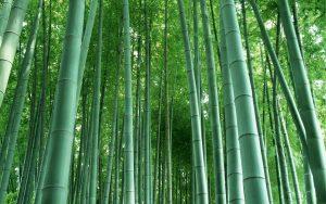 фотообои бамбуковой рощи по фен шуй
