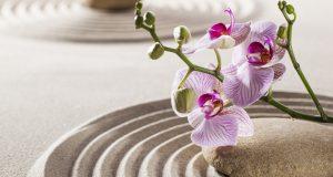 Трактовка орхидеи по фен-шуй