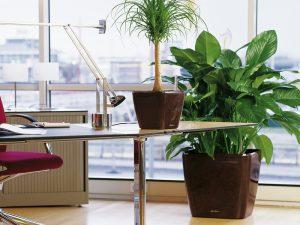 Какие цветы лучше для офиса по фен-шуй?