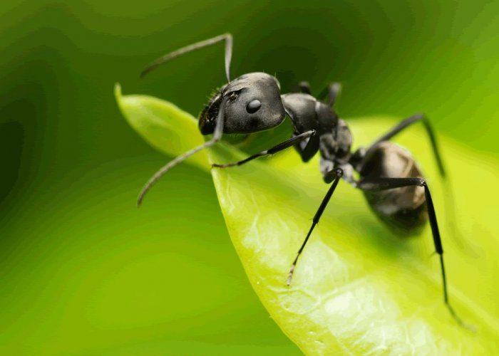 Приметы о муравьях