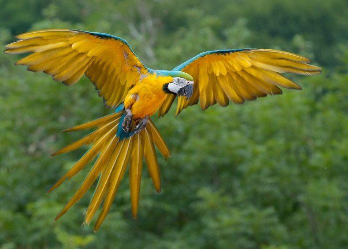 Прилетел попугай в дом