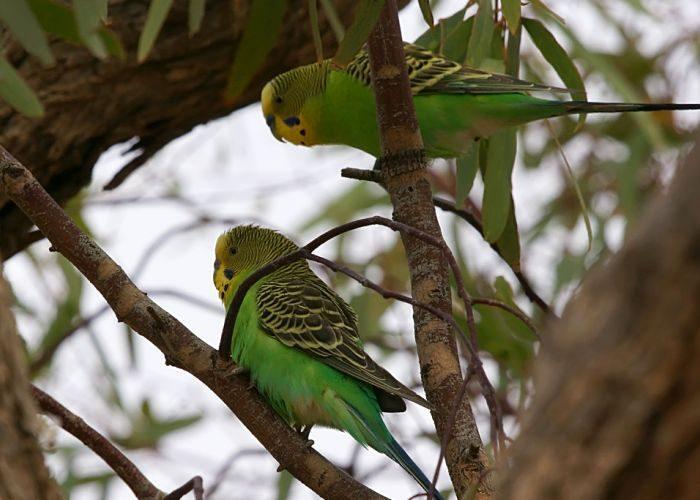 Поверья о попугаях