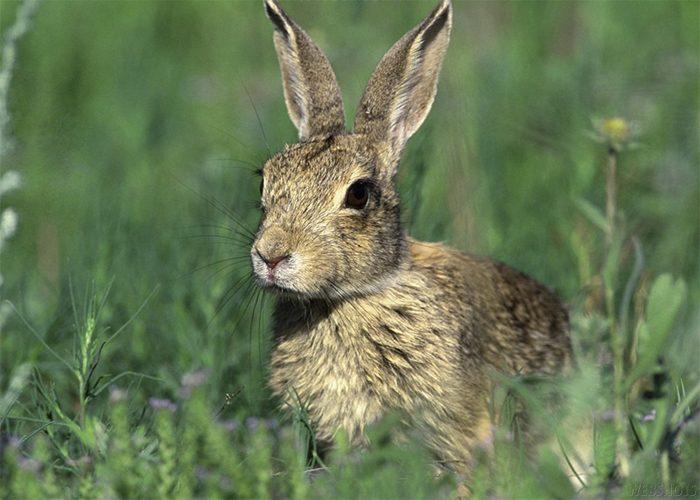 Приметы про зайцев