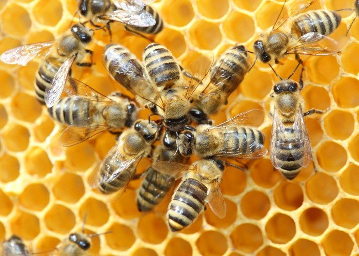 Приметы о пчелах