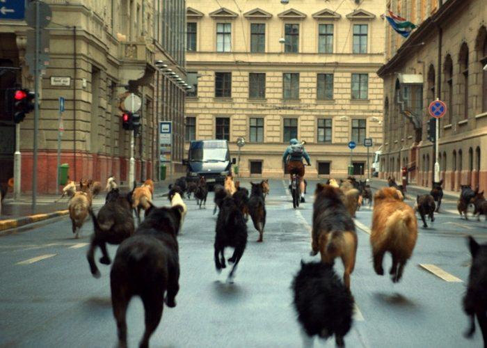 Собаки на дороге