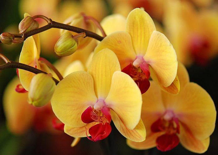 Приметы об орхидее