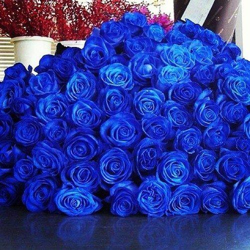 К чему дарят синие розы?